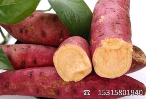 烟薯25批发市场